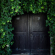 Stock Photo: Door covered with ivy