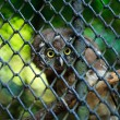 Owl looking through the bars — Stock Photo