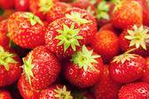 草莓的背景 — 图库照片
