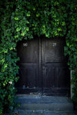 Door covered with ivy — Stock Photo