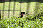 Toucan bird in the aviary — Stock Photo