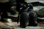 Penguins are standing at the water — Stockfoto