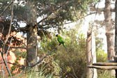 Parrot in the aviary — Stock Photo