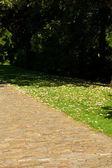 Fondo de follaje verde en el parque — Foto de Stock