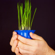 Stock Photo: Pot of green shoots in hands of men