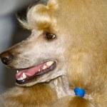 National Dog Show in Samara 06.07.2007 — Stock Photo