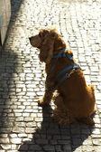 Hond zijn meester te wachten — Stockfoto
