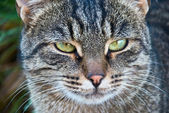 Portret van een prachtige kat in de natuur — Stockfoto