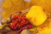 Sonbahar natürmort, tarak ve üvez — Stok fotoğraf