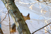 Squirrel sitting in a tree — Stock Photo