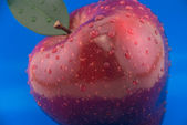Red apple on a blue background — Stock Photo