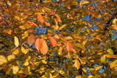 Background of a autumn leaves — Stock Photo