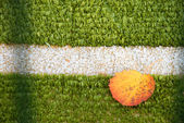 Football field with autumn leaves — Stock Photo