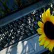 Laptop in green grass with a sunflower — Stock Photo