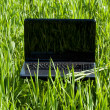 Laptop in green grass — Stock Photo