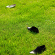 Stock Photo: Shoes bride and groom lying on green grass