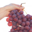 Bunch of grapes on the sunny sky background — Stock Photo