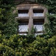 Window entwined with ivy — Stock Photo