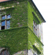 Entwined  ivy building against the sky — Stock Photo