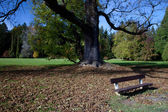 Lonely bench in the autumn forest — Stock Photo
