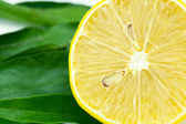 Lemon with green leaf isolated on white — ストック写真