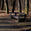 Lone wooden bench standing in autumn forest — Stock Photo