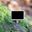 Blackboard attached to a tree branch in the forest — Stock Photo #6113641