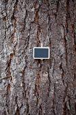 Sfondo di corteccia d'albero e lavagna — Foto Stock