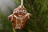 Christmas Toy gingerbread man hanging from a tree — Stock Photo