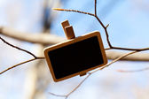 Blackboard attached to a tree branch in the forest — Stock Photo