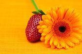 Fraises de fleur de gerbera se trouvant sur le tissu orange — Photo