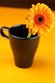 Gerbera flower in a black cup of the orange fabric — Stock Photo