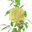 Stock Photo: Ficus and one euro coin isolated on white