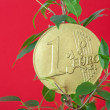 Ficus  and one euro coin on a red background — Stock Photo