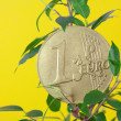 Ficus  and one euro coin on a yellow  background - Stock Photo