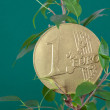 Ficus and one euro coin on a green background — Stock Photo