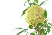 Ficus and one euro coin isolated on white — Stock Photo