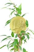 Фикус и один евро монеты, изолированные на белом фоне — Стоковое фото