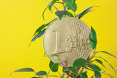 Ficus and one euro coin on a yellow background — Stock Photo