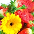 Background of red big juicy ripe strawberry and flower — Stock Photo #6133371