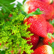 Background of red big juicy ripe strawberry and flower — Stock Photo #6133378
