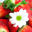 Background of red big juicy ripe strawberry and flower — Stockfoto