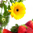 Background of red big juicy ripe strawberries and flower — 图库照片