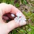 Royalty-Free Stock Photo: Blue snowdrop in hand against the green grass