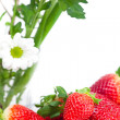 Background of red big juicy ripe strawberry and flower — Stock Photo #6142437