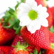 Background of red big juicy ripe strawberry and flower — Stock Photo #6142514
