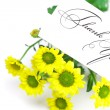 Yellow daisy and a card signed thank you isolated on white — Stock Photo