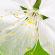 Stock Photo: Close-up of green leaf and white flower