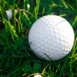 Royalty-Free Stock Photo: Background of spring green grass and golf ball
