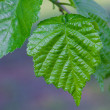 Stock Photo: Beautiful spring green leaves